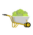 wheelbarrow and cabbage vegetables in garden vector image vector image