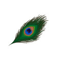 beautiful emerald-green feather of peacock vector image