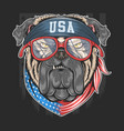bull dog usa america flag with bandana artw vector image