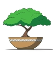 colorful bonsai tree isolated on white background vector image vector image