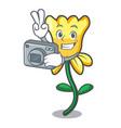photographer daffodil flower mascot cartoon vector image