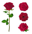 Red rose blooms set with branch of summer flower