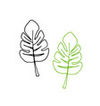 set of tropical monstera leaves outline vector image vector image
