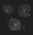 spider web sketch vector image vector image