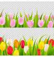 tulip border with transparent background vector image