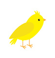 Canary bird Yellow feather White background vector image