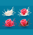 set of raspberry berries vector image