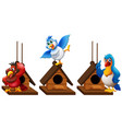 three parrot macaw birds in birdhouse vector image vector image