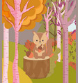 cute squirel with acorns forest trees hello autumn vector image vector image