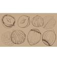 Hazelnut on white background Isolated nuts vector image vector image
