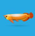 Isolated golden arowana Freshwater bony fish vector image vector image