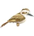 Kookaburra vector image vector image