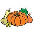 pumpkin color vector image