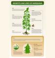 benefits and uses marijuana vertical textbook vector image vector image