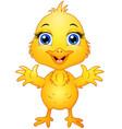 cute baby chicken cartoon vector image vector image