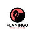 flamingo bird animal logo vector image