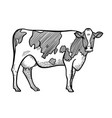 spotted cow hand drawn single image in a graphic vector image