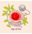 cup of tea with spoon and strainer vector image vector image
