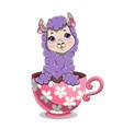cute adorable baby lama vector image vector image