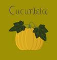 flat on background plant cucurbita vector image