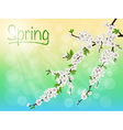Spring blooming cherry branch with white flowers