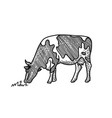 young cow eating grass hand drawn drawing suited vector image