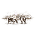 dairy farm cows graze in meadow rural vector image