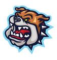 mad bulldog logo mascot vector image vector image