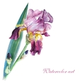 Pink iris watercolor vector image