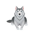 siberian husky lying isolated on white background vector image vector image