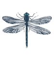 Hand drawn dragonfly vector image