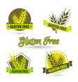 gluten free label intolerance circle badge vector image