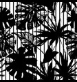 silhouettes palm monstera fan palm leaves vector image vector image