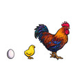 white egg chick and rooster sketch set vector image vector image