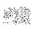 wild rose flower and leaf hand drawn botanical vector image vector image