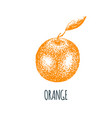hand drawn orange on white background vector image vector image