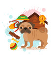 pug care infographic concept with dog grooming vector image vector image