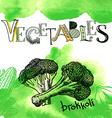 set engraving broccoli slice on white vector image