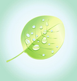 wonderful tree leaf vector image vector image