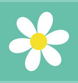 daisy chamomile cute flower plant collection vector image vector image