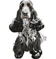 gun dog English Cocker Spaniels sitting vector image