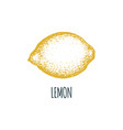hand drawn lemon on white background vector image vector image