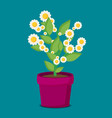 flat flower in pot vector image