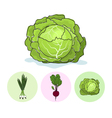 Icons green onionbeetcabbage vector image