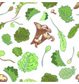 lettuce pattern with girolle vector image