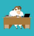 ram boss sheep businessman at desk farm office vector image vector image