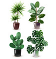 realistic houseplant icon set vector image