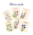 set 6 cards with color flowers vector image