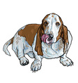 basset hound dog sitting and stick out its tongue vector image vector image