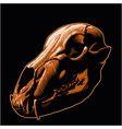 bear skull black background vector image vector image